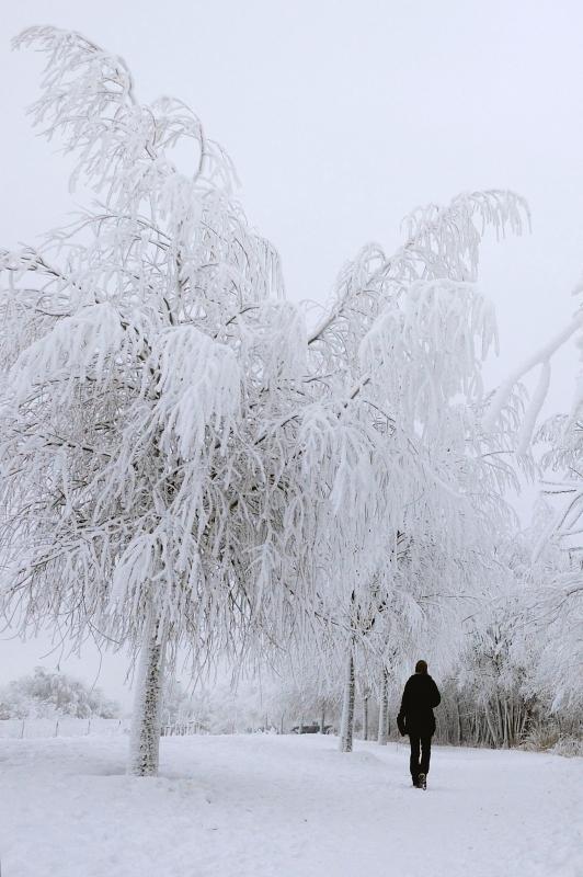 Jana und die Eisbäume
