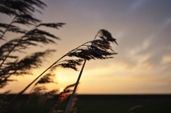 Sonne im Hintergrund, Gestrüp im Vordergrund