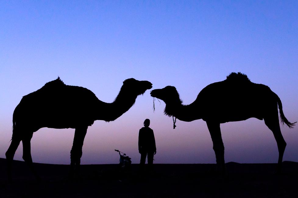 Im Schatten der Kamele