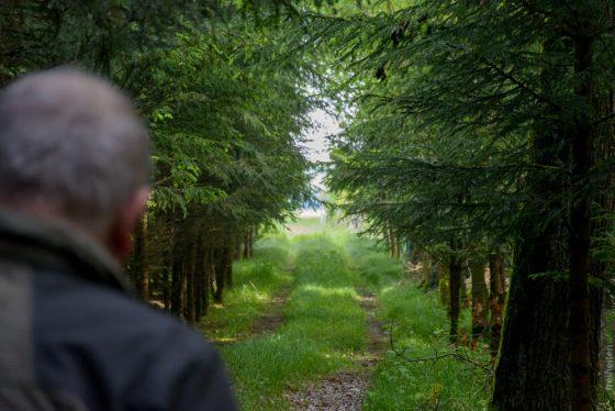 Waldweg um Illenschwang