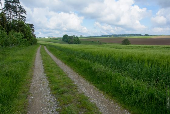 Forstweg um Illenschwang