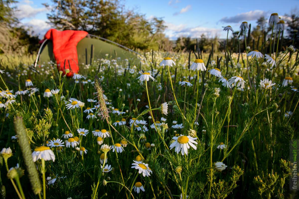 Blumenwiese und Zelt