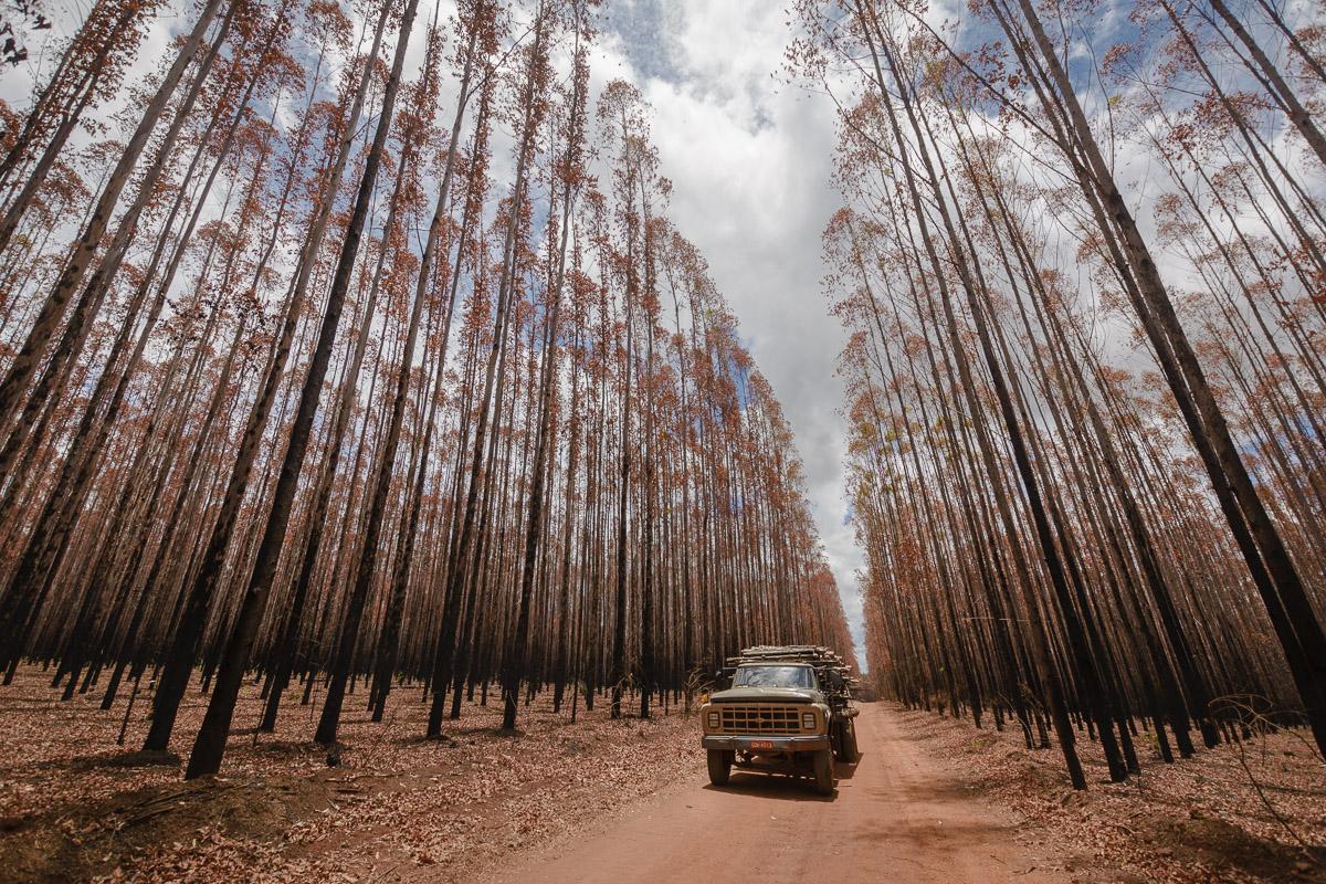 Das ist Wald