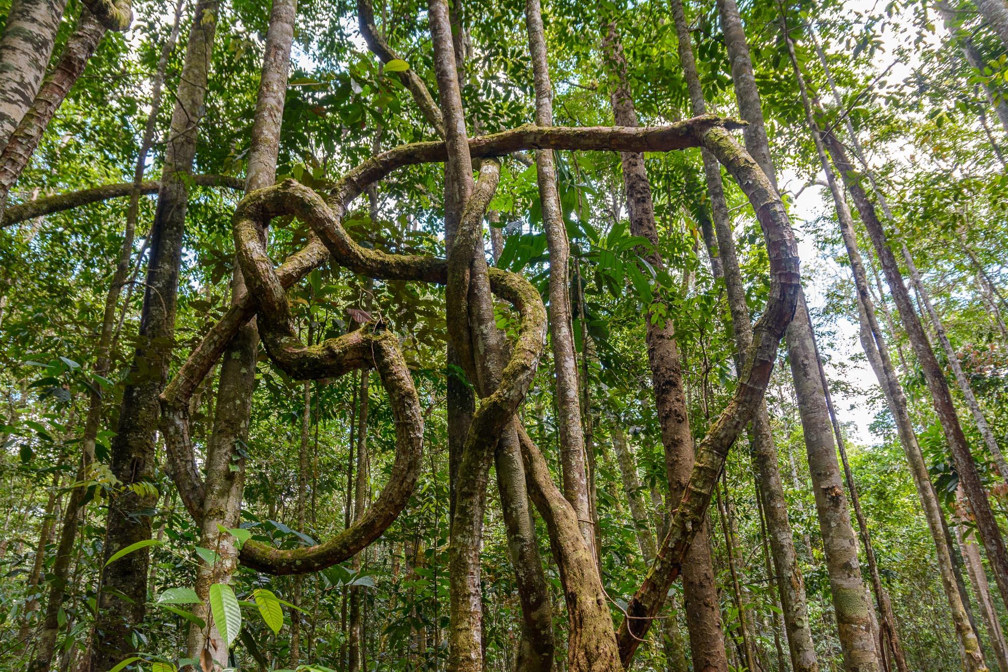 Wohin wächst nur der Baum